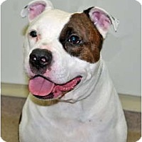 Adopt A Pet :: Munsta - Port Washington, NY
