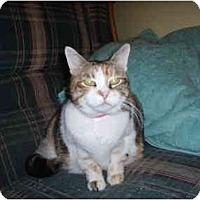 Adopt A Pet :: Annabelle - Hamburg, NY
