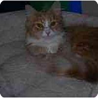 Adopt A Pet :: Amber - Columbus, OH