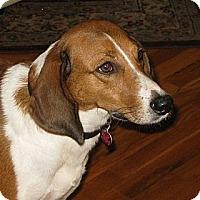 Adopt A Pet :: Lady - Tallahassee, FL