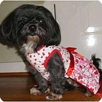 Adopt A Pet :: Darlene - Mooy, AL
