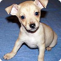 Adopt A Pet :: Starbucks - Tumwater, WA