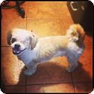 Adopt A Pet :: Benhur