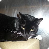 Adopt A Pet :: Shellee - Colmar, PA