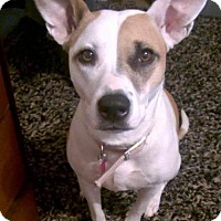 Adopt A Pet :: Samone (Courtesy Post) - Upper Sandusky, OH