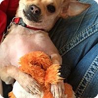 Adopt A Pet :: Alvin - Chicago, IL