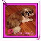 Adopt A Pet :: Lisa Marie
