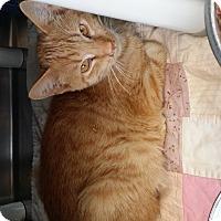Adopt A Pet :: Al - Chippewa Falls, WI