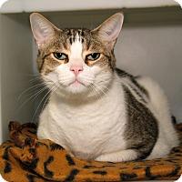 Adopt A Pet :: Paco - Milford, MA