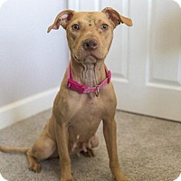 Adopt A Pet :: Marigold - Southampton, PA