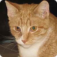 Adopt A Pet :: Cameron - New Windsor, NY