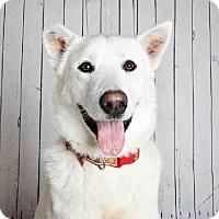 Adopt A Pet :: EINSTEIN - Murray, UT