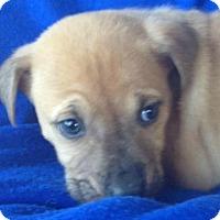 Adopt A Pet :: Eli - Louisville, KY