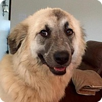 Adopt A Pet :: Ellie Belle - Enfield, CT
