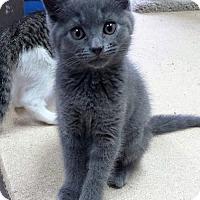 Adopt A Pet :: Athena - Seaford, DE