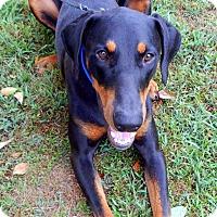 Adopt A Pet :: Sonny - Homewood, AL