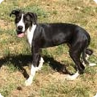 Adopt A Pet :: Molly - Gridley, CA