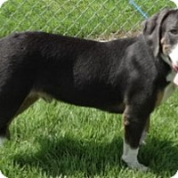 Adopt A Pet :: Brutus - Olive Branch, MS
