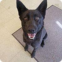 Adopt A Pet :: Vivian (Cat Friendly) - Nashua, NH