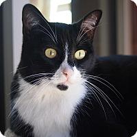 Adopt A Pet :: Inga - Coronado, CA