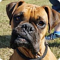 Adopt A Pet :: Brooklyn - LaHarpe, KS