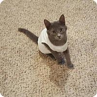 Adopt A Pet :: Pikachu - Ridgeland, SC