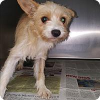 Adopt A Pet :: Pandora - Brownsville, TX