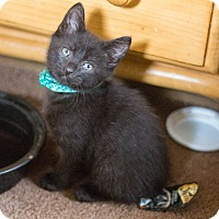 Adopt A Pet :: Flynn - Morgantown, WV