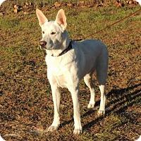 Adopt A Pet :: Titan - Citrus Springs, FL