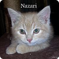 Adopt A Pet :: NAZARI - Golsboro, NC