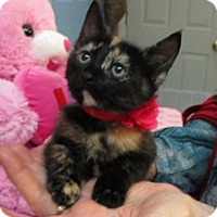Adopt A Pet :: Emmy - Picayune, MS