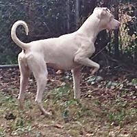 Adopt A Pet :: Brian - Arlington, VA