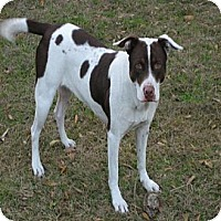 Adopt A Pet :: Dixie - Williston, FL