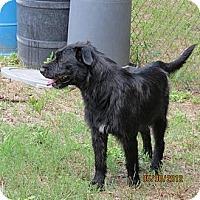 Adopt A Pet :: SIsco Wilder - Southampton, PA