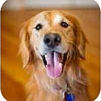 Adopt A Pet :: Truman - Scottsdale, AZ
