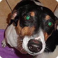 Adopt A Pet :: ZEUS II - Scottsdale, AZ