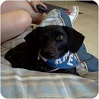 Adopt A Pet :: Jolene - Phoenix, AZ