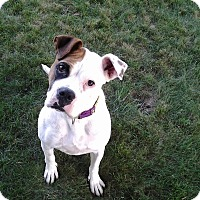 Adopt A Pet :: Lucy - Westminster, MD