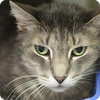 Adopt A Pet :: Arguros - Chicago, IL