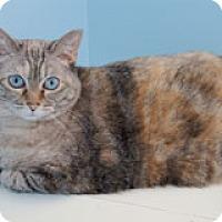 Adopt A Pet :: Clover - Fairfax, VA