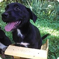 Adopt A Pet :: Lucy - Warrenton, NC