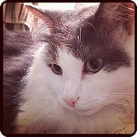 Adopt A Pet :: Remington - Charlotte, NC