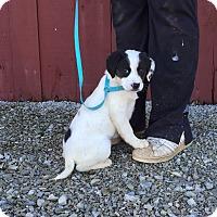 Adopt A Pet :: Jeffina - Plainfield, CT