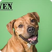 Adopt A Pet :: OWEN - Grafton, OH