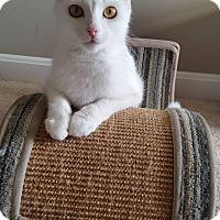 Adopt A Pet :: Lucille - Covington, KY