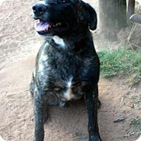 Adopt A Pet :: HOGAN - Rowayton, CT