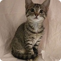 Adopt A Pet :: Princess Elizabeth - Fullerton, CA