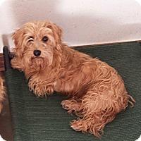 Adopt A Pet :: Maytag - Washburn, MO