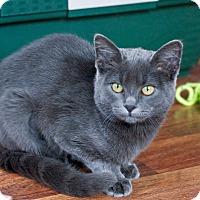 Adopt A Pet :: Miss Sammy - Troy, MI