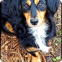 Adopt A Pet :: River - Johnson City, TX